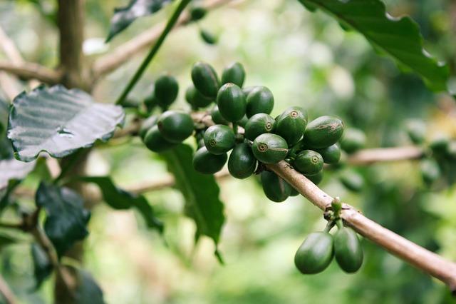 Что такое органический кофе?